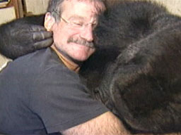 Robin Williams HeartsKoko